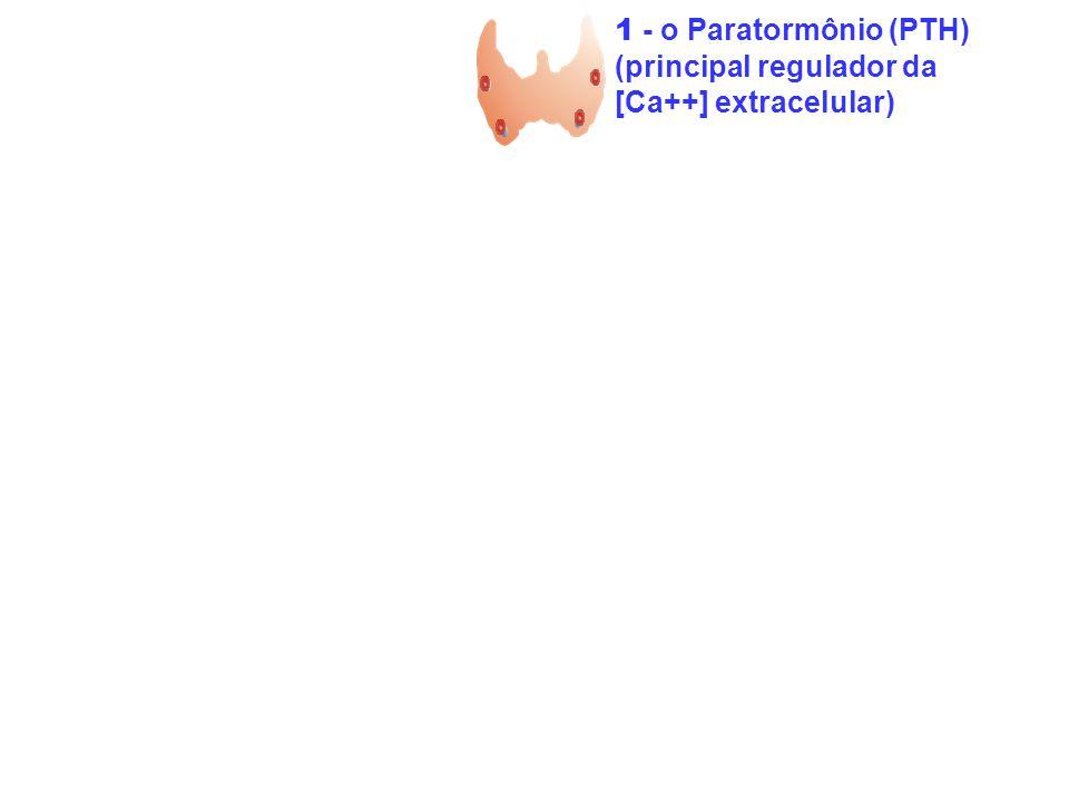 1 - o Paratormônio (PTH) (principal regulador da [Ca++] extracelular)